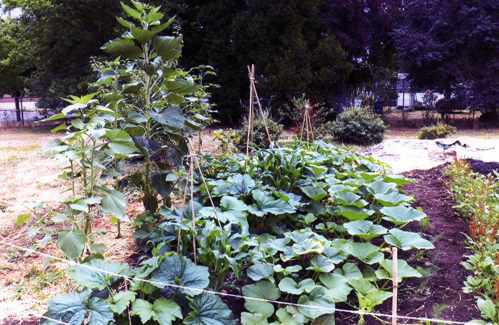 Permaculture Learning Garden