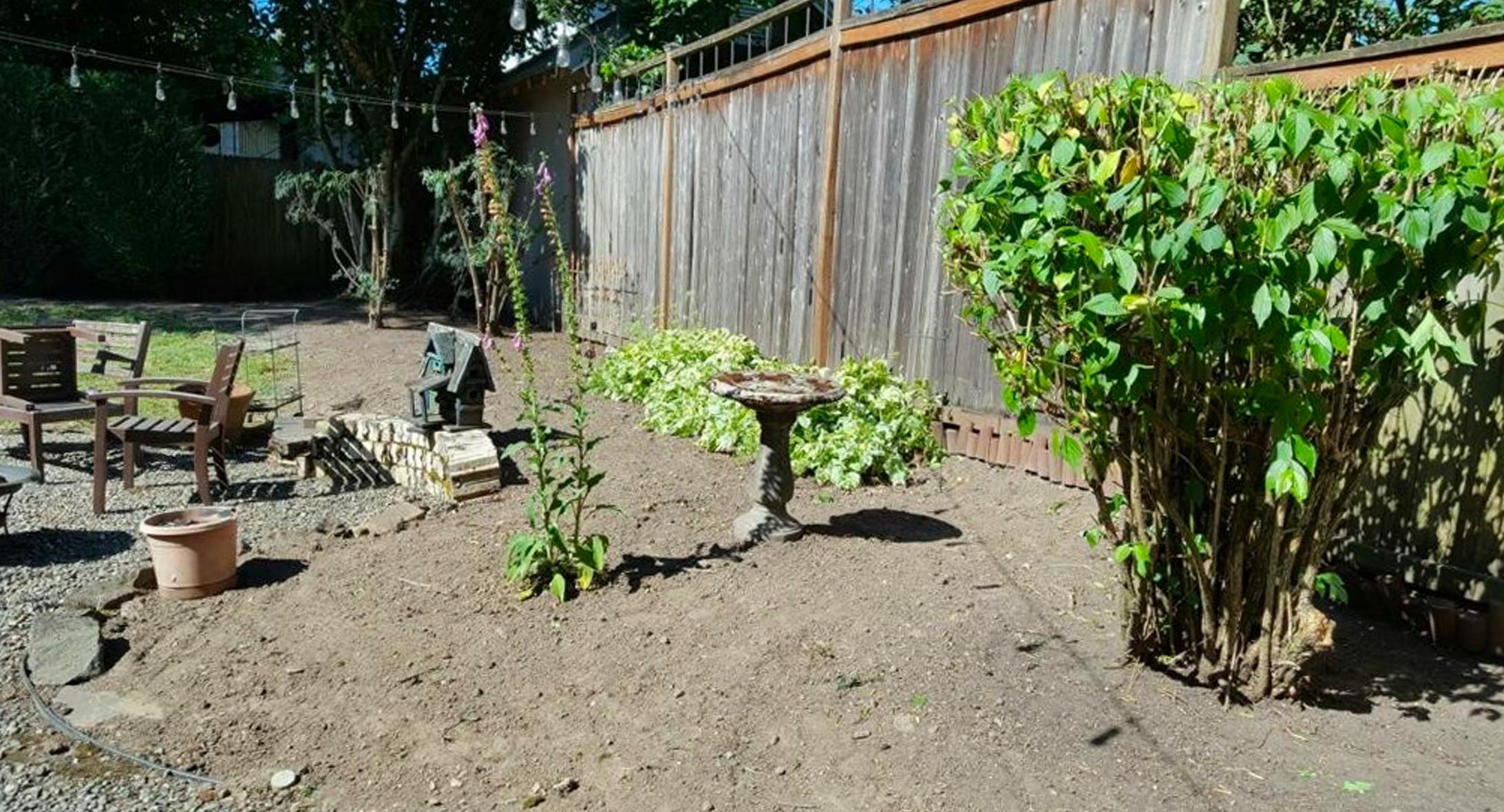 Urban Woodland - back yard